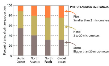 LifeLinkedtoIce Primary production by phytoplankton