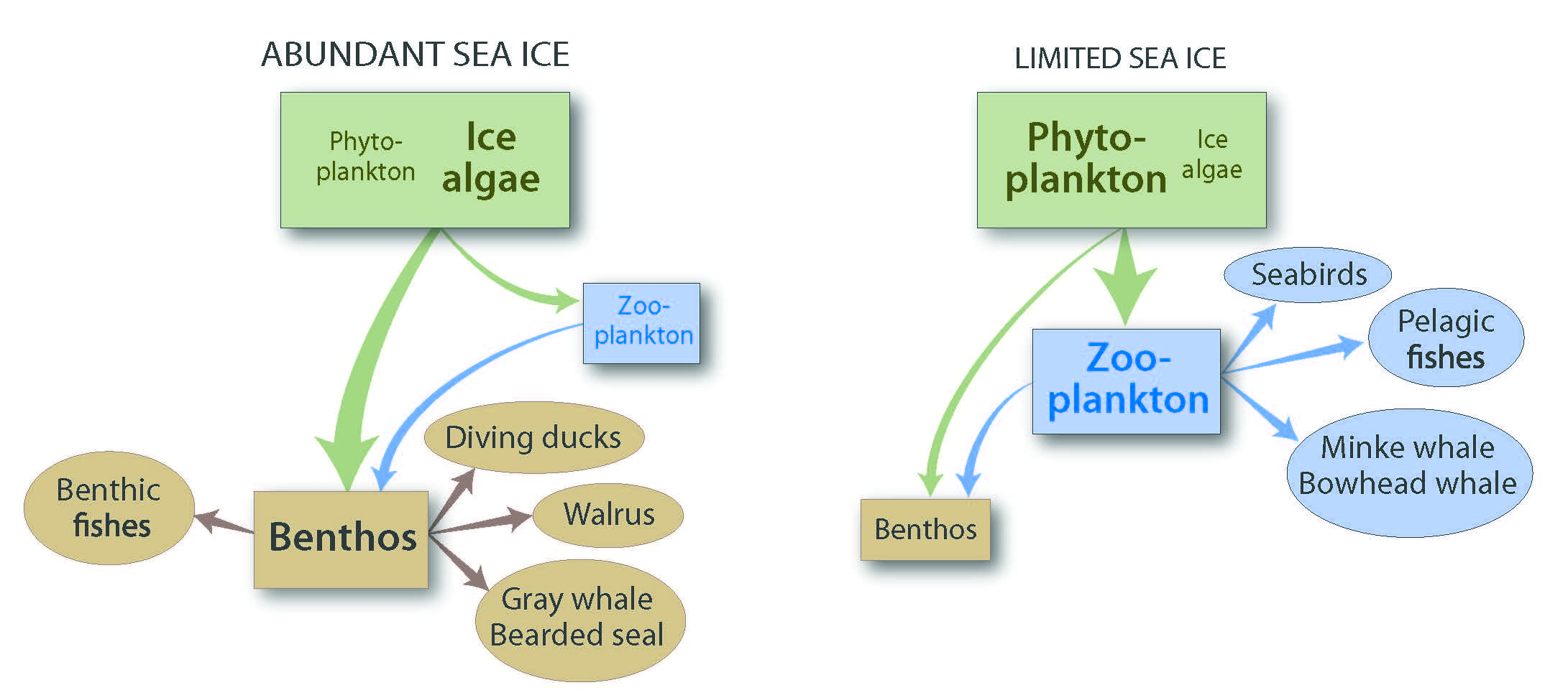 LifeLinkedtoIce Sea ice Ecosystem structure